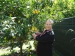 Um das dezenas de árvores de limome